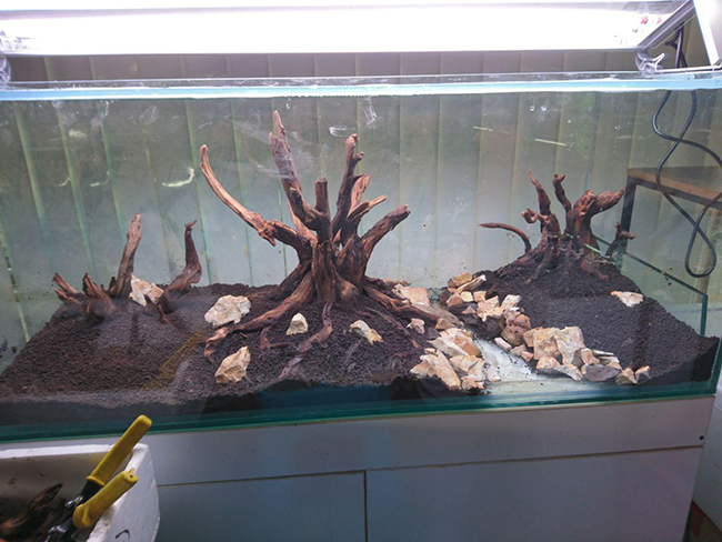 طراحی یک آکواریوم گیاهی