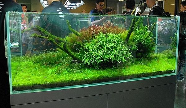 آکواریوم گیاهی سبک ژاپنی