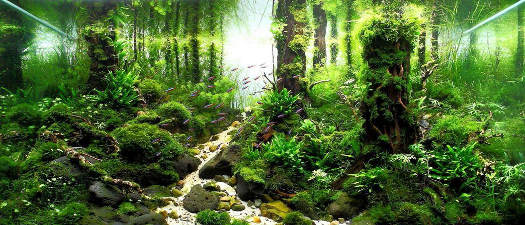 آکواریوم گیاهی سبک جنگلی